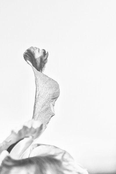 Die suchende Lis von Ellen van Schravendijk