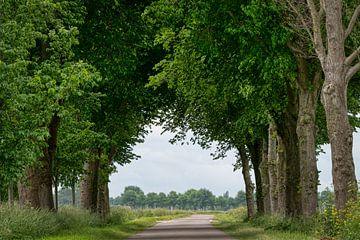 Het noord Hollands landschap