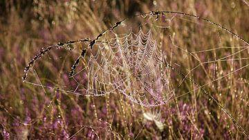 Spinnenweb In De Morgendauw van Daphne Photography