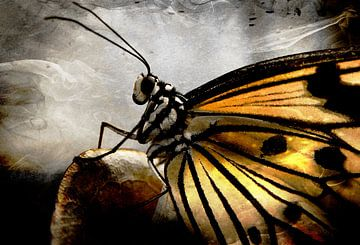 Vlinder van Pim Klabbers