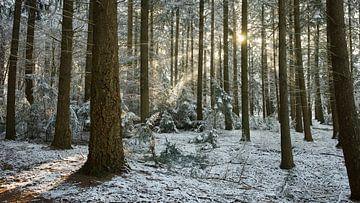 Zonnestralen in de kou van Jelle Dekker