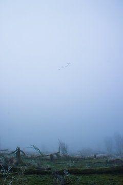 Lonesome flight to nowhere van