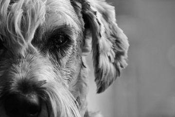 Hund kann von Marije Zwart