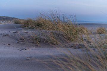 Wandeling in de duinen van Samantha van Leeuwen