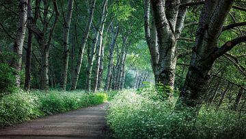Morgen in den Wäldern, Broekpolderbos, Vlaardingen von Henno Drop