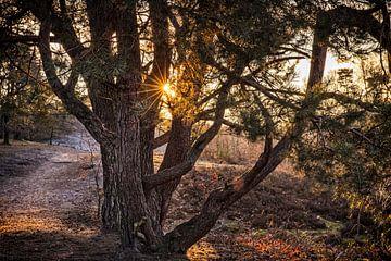 Zonsopgang Brunssummerheide van Rob Boon