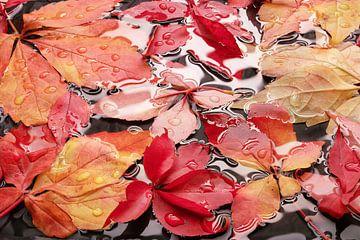 Herbstblätter auf nassem Boden I Wassertröpfchen von Heinz Trebuth