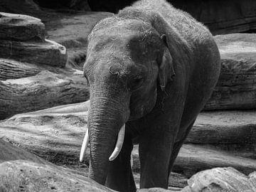 de eigenwijze olifant van thijmen hoekerd