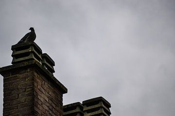 Pigeon / duif  von melissa demeunier