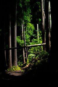 Subtropisch bos, Azoren van