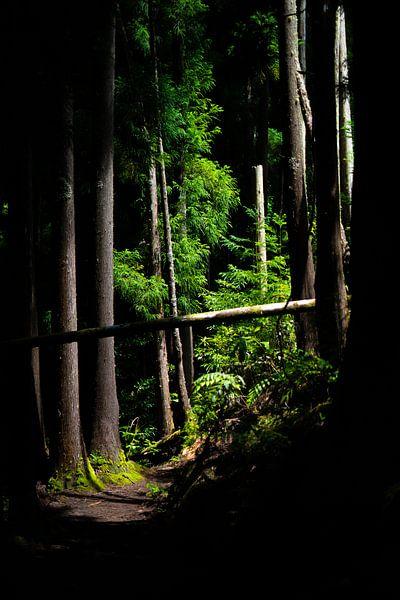 Subtropisch bos, Azoren van Tomas Grootveld