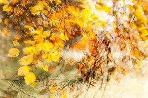 Wervelwindje door de bladeren, het is herfst van