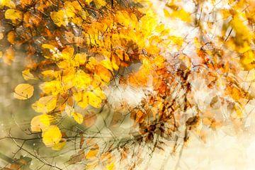 Wervelwindje door de bladeren, het is herfst sur