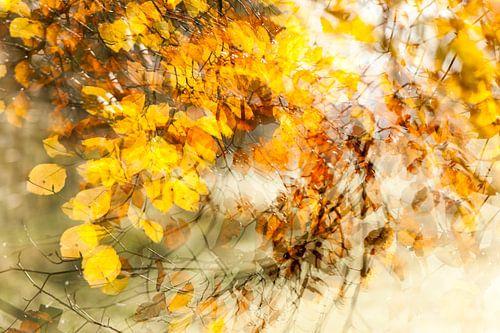 Wervelwindje door de bladeren, het is herfst