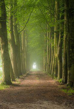 Stilte in het bos van