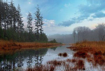 Mistig herfstbos met meer