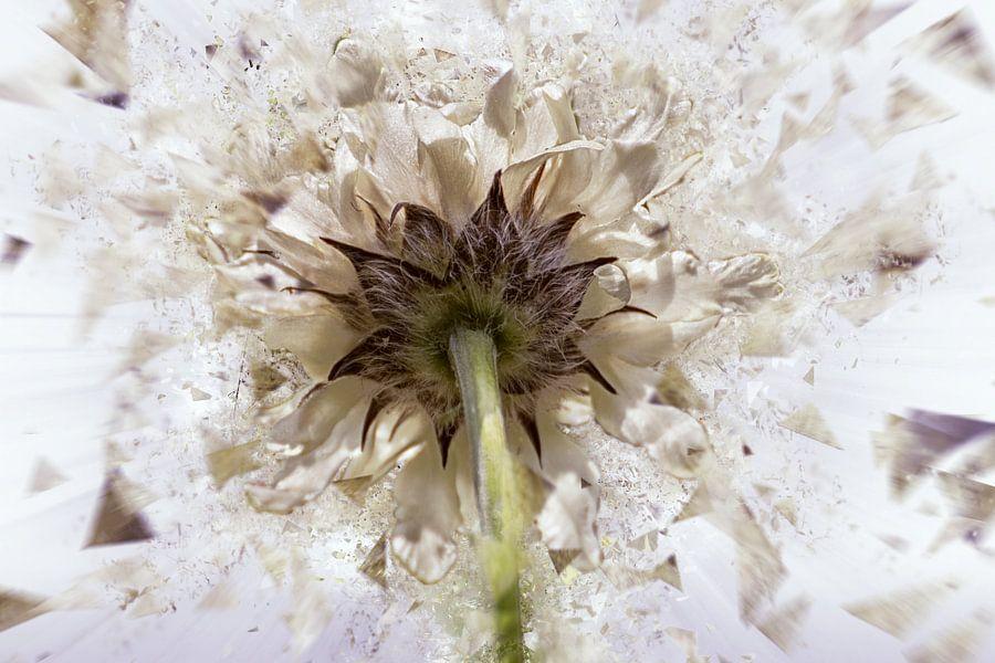 Witte bloem in fragmentatie