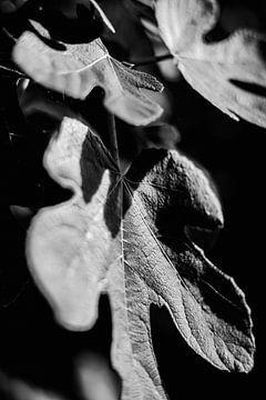 Planten abstract gemaakt van Rene  den Engelsman