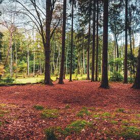Wald im Sumpfgebiet von Skyze Photography by André Stein