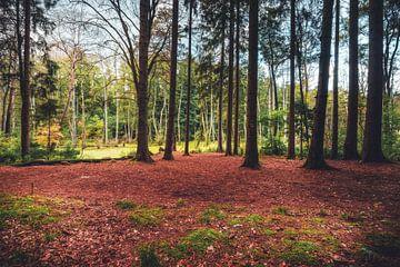 Wald im Sumpfgebiet