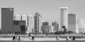 La skyline de Rotterdam vue de  Pijnacker