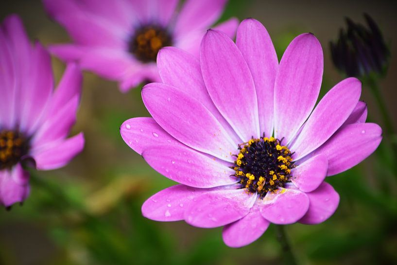 paarse bloem van Lizet Wesselman