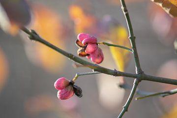 kleurige winterbloesems van Tania Perneel