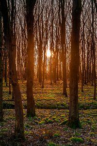 Een mooie zonsondergang tussen de bomen van