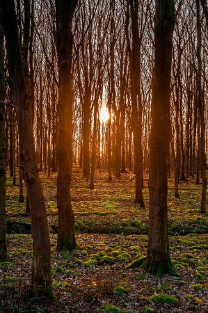Een mooie zonsondergang tussen de bomen