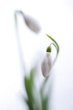 Sneeuwklokjes tango von Chantal van Dooren