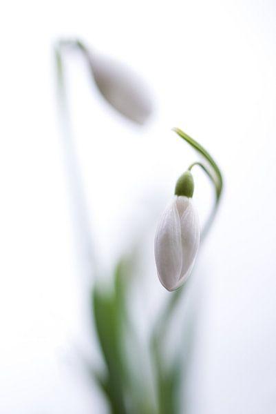 Sneeuwklokjes tango van Chantal van Dooren