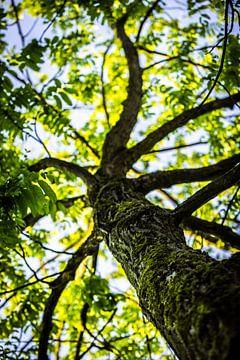 Natürliches Grün von Capacidad Fotografie
