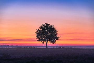 Eenzame boom tijdens zonsopkomst | kleurrijke landschapsfoto | Heide bij Ermelo van Marijn Alons