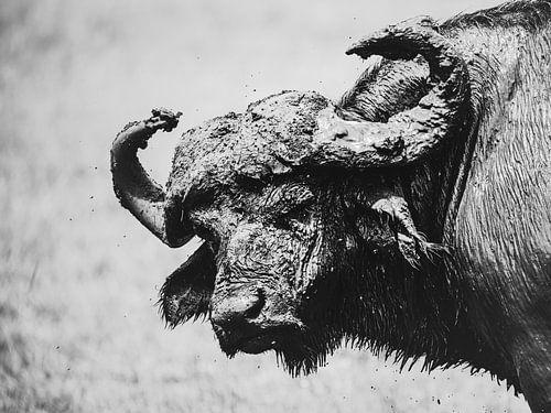 Stoere buffel
