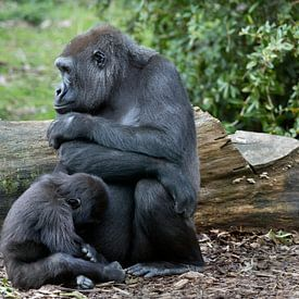 Gorilla mum with baby sur Ab Wubben