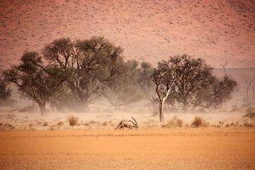 NAMIBIA ... through the storm II van