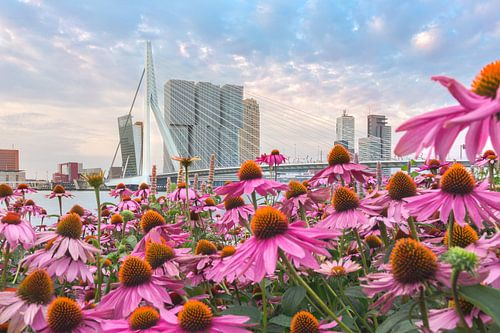 Fleurige bloemen voor de skyline van Rotterdam