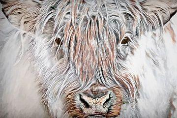 Schotse hooglander van Francis Dost