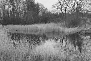 étang dans la forêt de Staelduinse (noir/blanc)