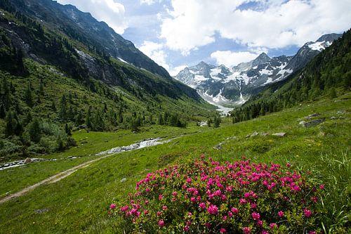 Alpen Uitzicht