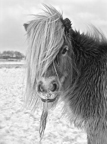 Shetland Pony in Winterlandschap van