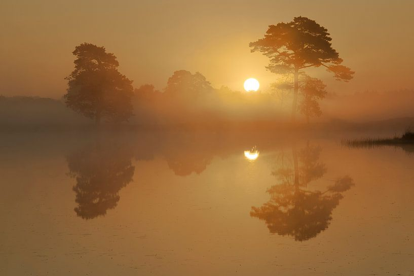 Gouden zonsopgang. van Piet Haaksma