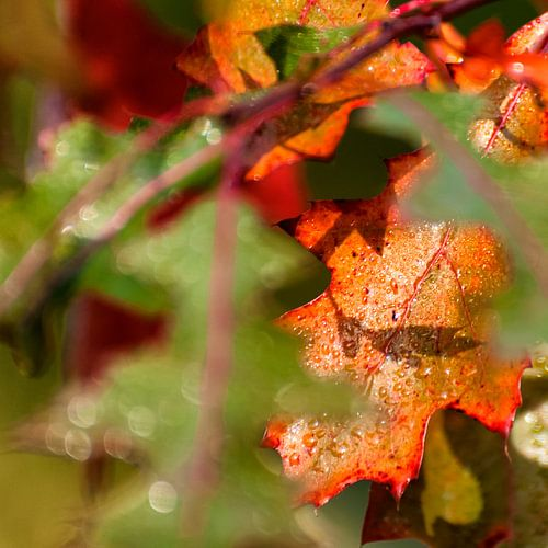 De Kleur van Herfst