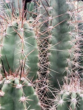 Kaktus-Familie von Danielle Fassbender
