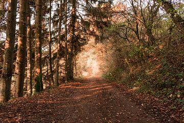 Licht op mijn pad von Thirza Sprong