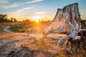 Sonnenuntergang über der Heidelandschaft des Aekingerzandes