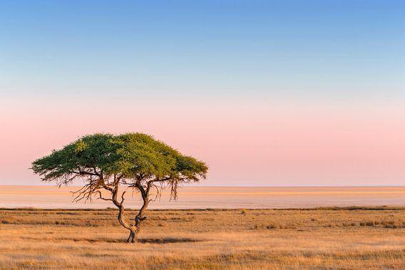 Eenzame Kameeldoorn groeiend voor een uitgestrekte zoutvlakte bij zonsopkomst