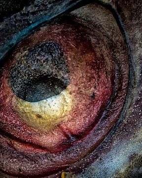 Das schwarze Loch von Ron van Gool