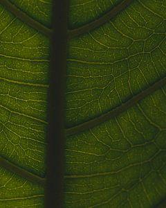Groene nerven #2 van Jeffrey Hoorns