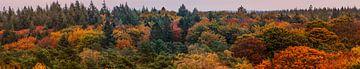 Herfstkleuren Panorama van Renzo van den Akker